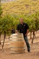 Meet Orfila Winery's new winemaker - Justin Mund Justin Mund