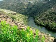 Exploring the Douro River wine region of Portugal winery_two.jpeg