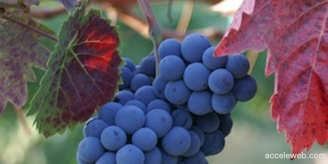valley_grapes_325_300.jpg