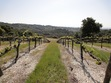 Far Out Wineries = A Groovy Wine Experience DunningVineyard3.jpg
