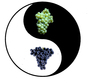 Yin & Yang* in Wine Country Yin__Yang-GRAPES-Final.jpg
